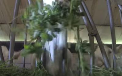 Osez l'affouragement en vert pour les chèvres : interview de Christophe Tardé
