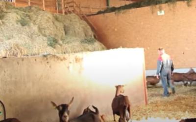 Osez le foin ventilé pour vos chèvres : interview de Raphaël Brunet.